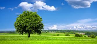 životné prostredie 2